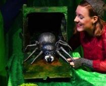 Otto, die Kleine Spinne // Foto: Berny MeIer
